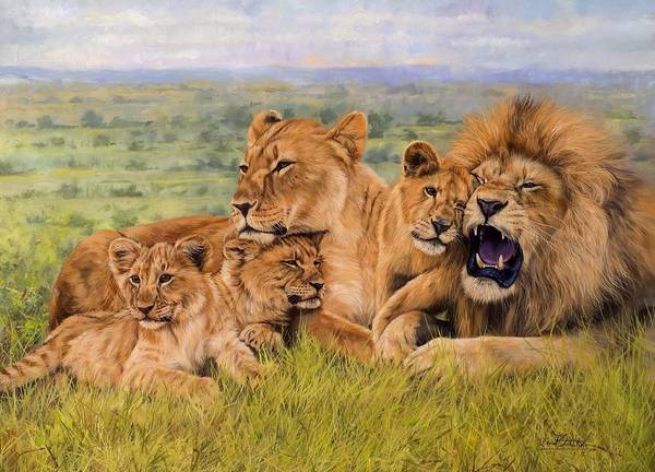 Lion Poster featuring the painting Lion Family by David Stribbling