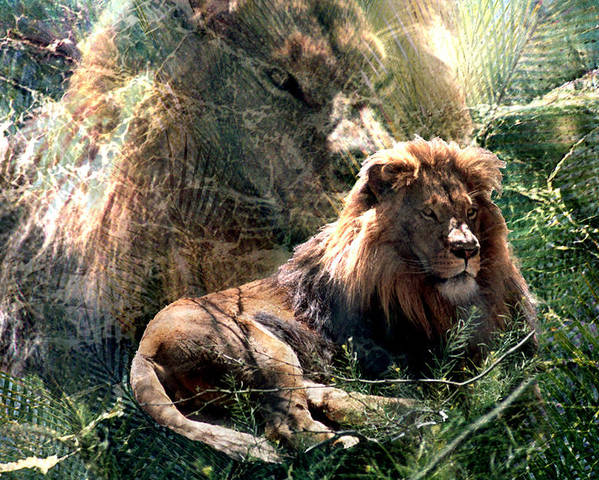 Lion Poster featuring the digital art Lion Spirit by Lisa Yount