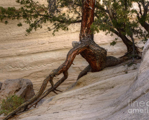 Tree Poster featuring the photograph Living Gracefully by Bob Christopher