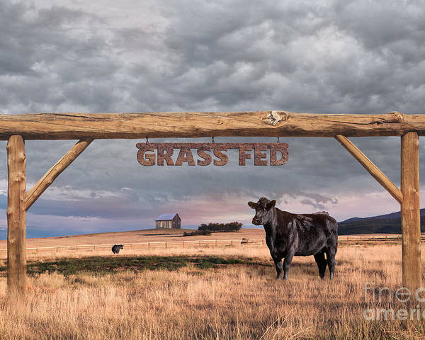 Ranch; Grass Fed; Farm; Field; Sky; Landscape; Cattle; Nature; Organic; Rural; Grass; Fence; Green; Entrance Poster featuring the photograph Log Entrance To Grass Fed Angus Beef Ranch by Susan McKenzie