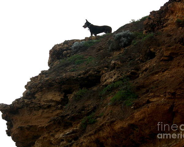 Dog Poster featuring the photograph Looking Out To Sea by Amanda Holmes Tzafrir