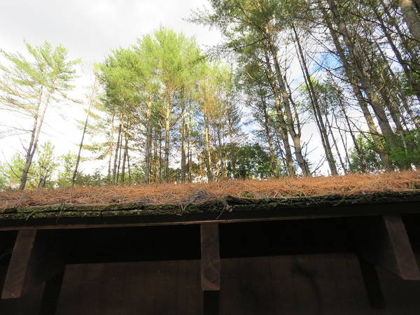 Trees Poster featuring the photograph Looking Up The Shed by Choi Ling Blakey