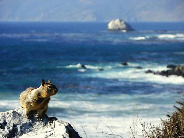 Squirrels Poster featuring the photograph Lost At Sea by Karen Wiles