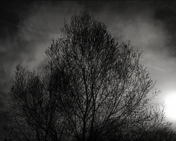 Trees Poster featuring the photograph Lost In Moments by Taylan Apukovska