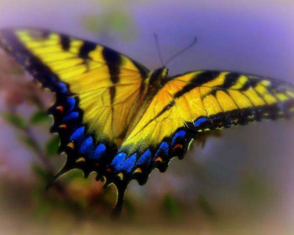 Butterflies Poster featuring the photograph Magic Of Flight by Karen Wiles