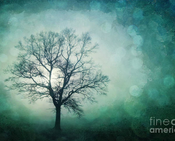Tree Poster featuring the photograph Magic Tree by Priska Wettstein