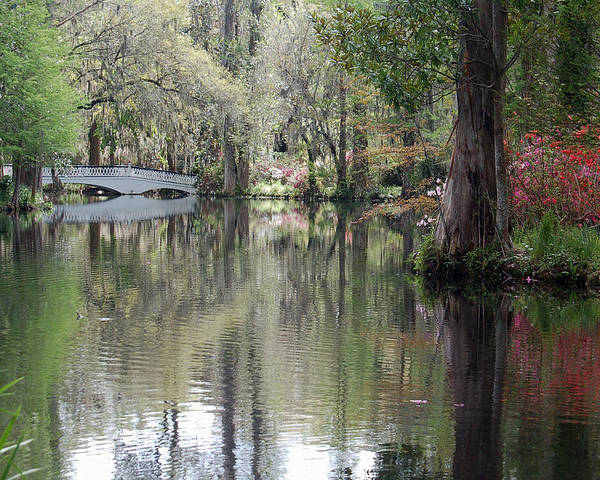 Magnolia Plantation Garden Poster featuring the photograph Magnolia Plantation Gardens Series II by Suzanne Gaff
