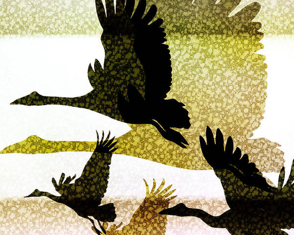 Animals Poster featuring the digital art Magpie Geese In Flight by Holly Kempe