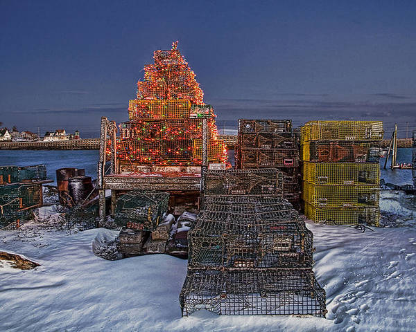 Landscape Poster featuring the photograph Maine's Other Christmas Tree by David Whiteside