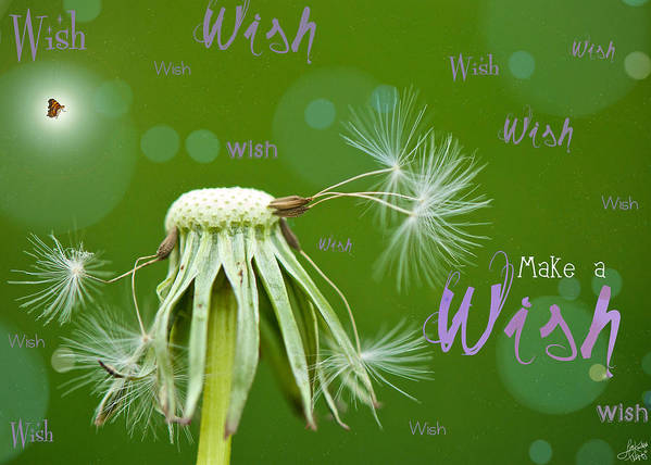 Birthday Card Poster featuring the photograph Make A Wish Card by Lisa Knechtel