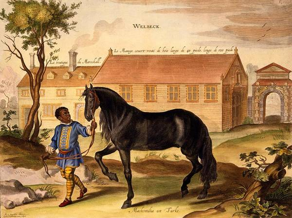 Horse Poster featuring the drawing Makomilia, A Turk, Led By A Negro by Abraham Jansz. van Diepenbeke