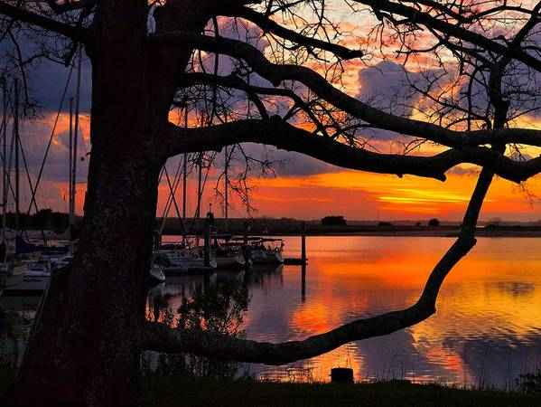 Sunrise Poster featuring the photograph Marina Mood by Laura Ragland