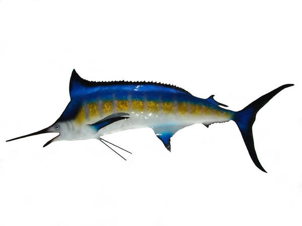 Marlin Poster featuring the sculpture Marlin by Diane Snider