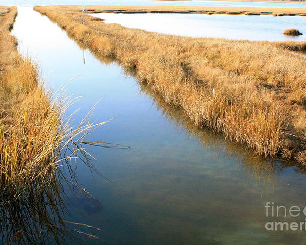 Marsh Poster featuring the photograph Marsh4 by Crystal Morin
