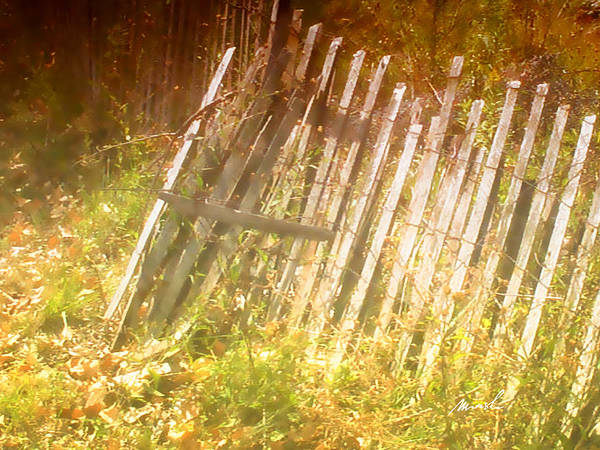 snow Fence Poster featuring the photograph Meditation In Sunlight 2 by The Art of Marsha Charlebois