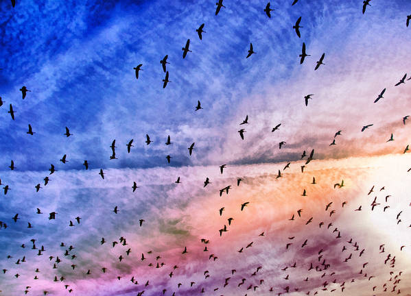 Bird Poster featuring the photograph Meet Me Halfway Across The Sky 2 by Angelina Vick