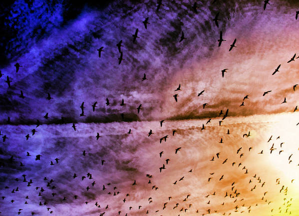 Bird Poster featuring the photograph Meet Me Halfway Across The Sky 3 by Angelina Vick