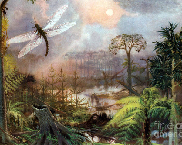 Flora Poster featuring the photograph Meganeura In Upper Carboniferous by Science Source