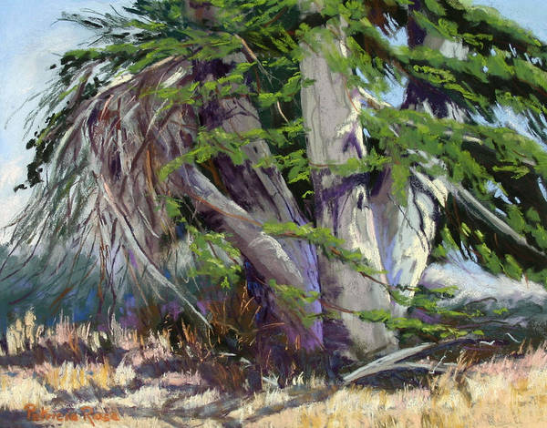 Plein Air Pastel Landscape Of An Old Cypress Tree Poster featuring the pastel Mendocino Cypress II by Patricia Rose Ford