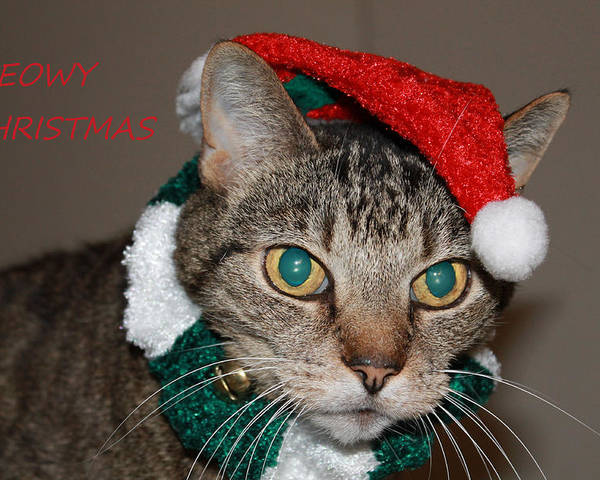Christmas Poster featuring the photograph Meowy Christmas by Catie Canetti