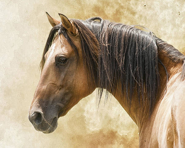 Horse Poster featuring the photograph Mesteno by Ron McGinnis