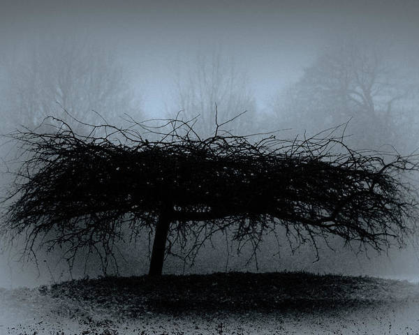 Britain Poster featuring the photograph Middlethorpe Tree In Fog Blue by Tony Grider