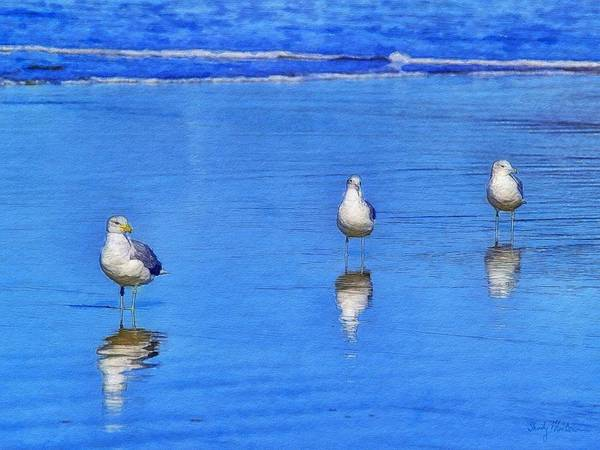 Seagulls Poster featuring the painting Mine... Mine... Mine... Trio by Sandy MacGowan