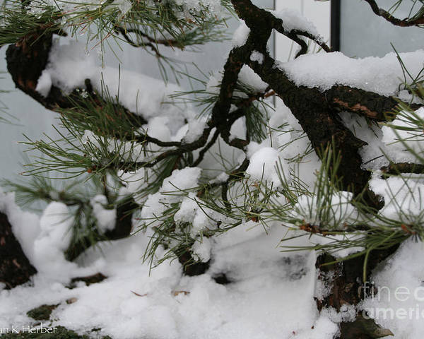 Snow Poster featuring the photograph Minnesota Bonsai by Susan Herber