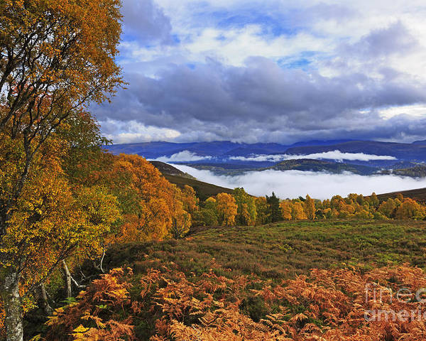 Misty Poster featuring the photograph Misty Day In The Cairngorms II by Louise Heusinkveld