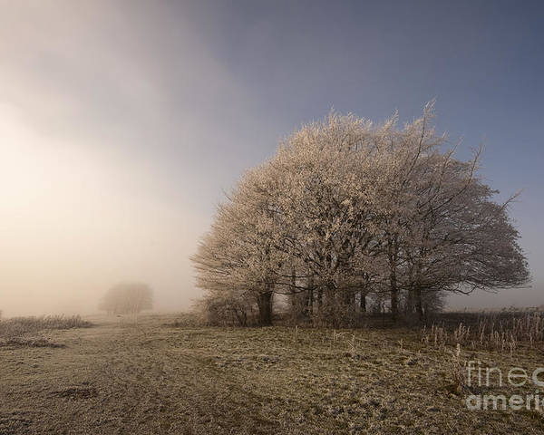 Autumn Poster featuring the photograph Misty Morn by Anne Gilbert