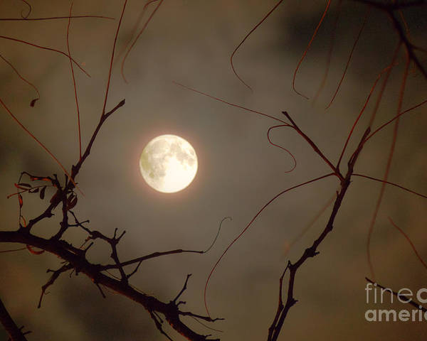 Illinois Poster featuring the photograph Moon Behind Branches by Deborah Smolinske