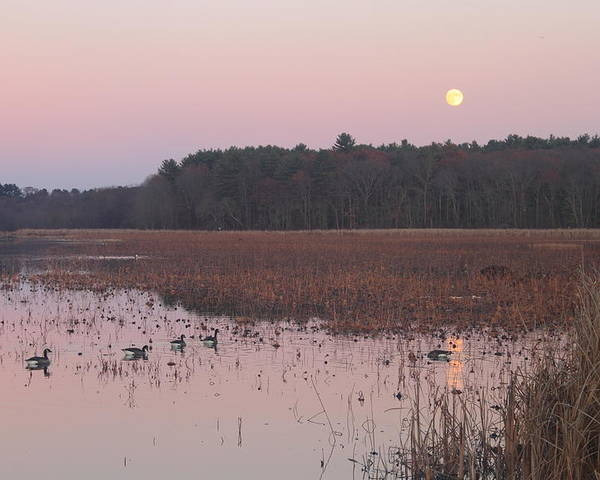 Moon Poster featuring the photograph Moonrise Over Waterfowl Pond by John Burk