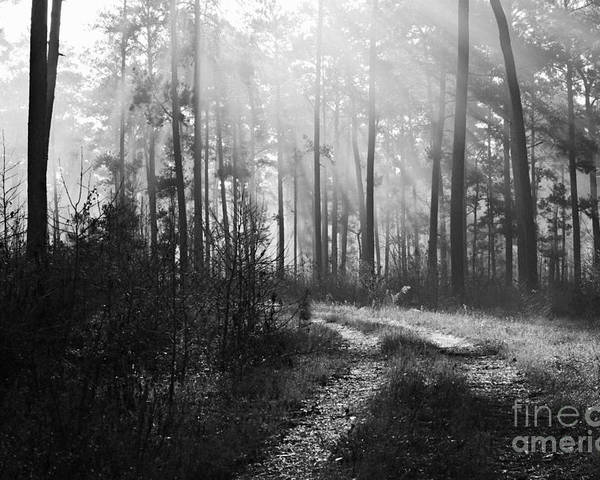 B&w Poster featuring the photograph Morning Mist In Monochrome by Gary Richards