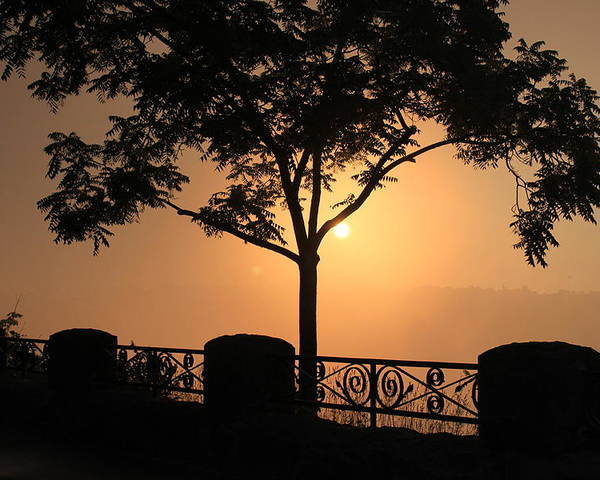 Tree Poster featuring the photograph Morning Sunrise by Bruno Campagiorni