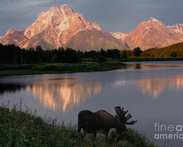 Grand Teton Poster featuring the photograph Morning Tranquility by Sandra Bronstein
