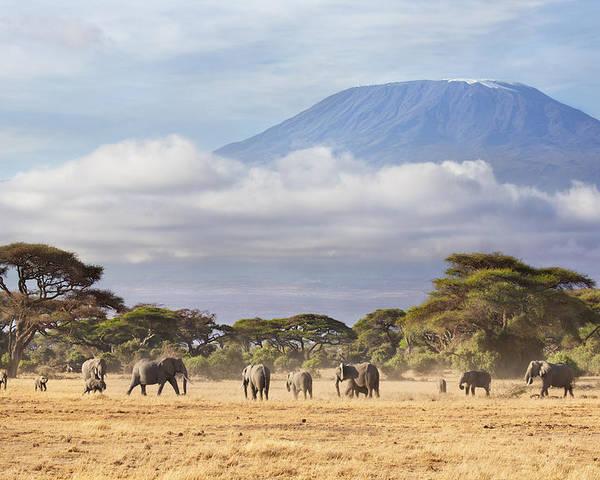 Nis Poster featuring the photograph Mount Kilimanjaro Amboseli by Richard Garvey-Williams