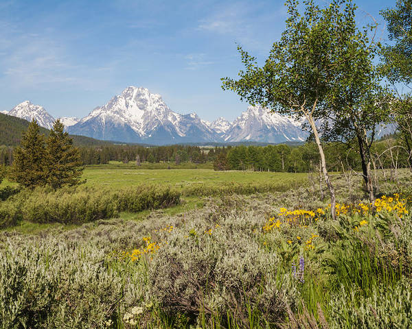 Mount Moran View Wildflowers Grand Teton National Park Mountain Landscape Poster featuring the photograph Mount Moran View by Brian Harig