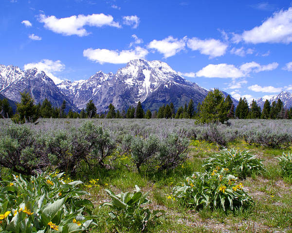 Mount Moran Wildflowers Grand Teton National Park Poster featuring the photograph Mount Moran Wildflowers by Brian Harig
