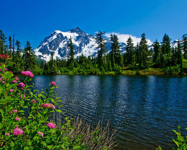 Mount Shuksan Poster featuring the photograph Mount Shuksan And Highwood Lake by Dan Mihai
