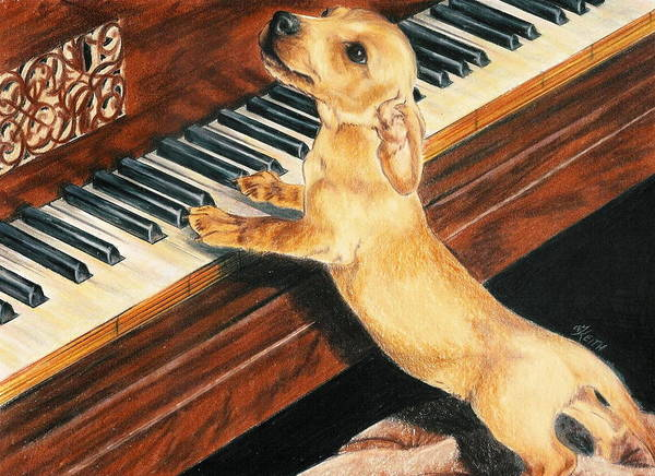 Purebred Dog Poster featuring the drawing Mozart's Apprentice by Barbara Keith
