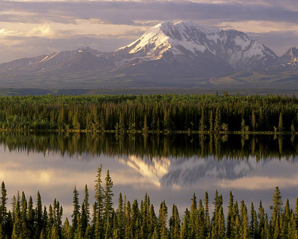 Alaska Poster featuring the photograph Mt Drum Over Willow Lake Wrangell-st by Calvin Hall