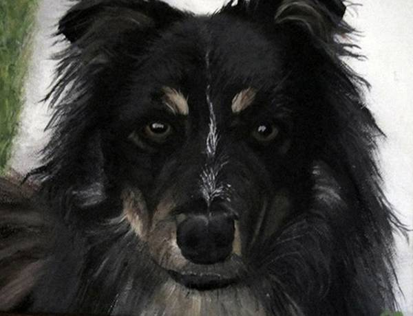 Austrailian Shepard/ Border Collie Cross.k9 Poster featuring the painting My Favorite Bud by Sharon Duguay