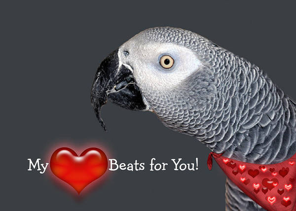 Bird Poster featuring the mixed media My Heart Beats For You by Donna Proctor