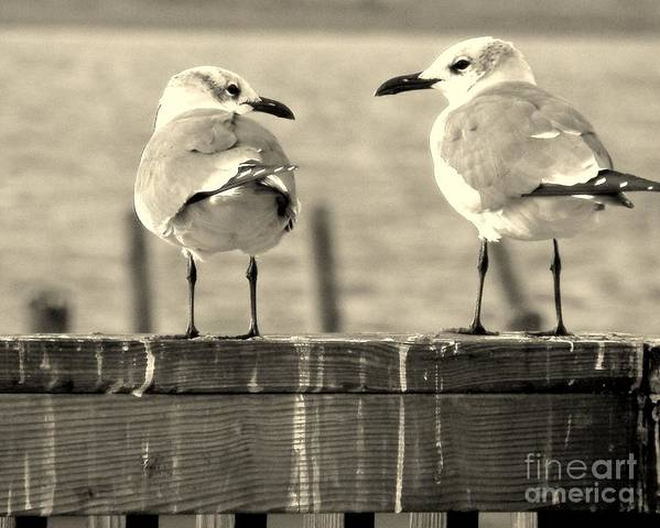 Sea Gulls Poster featuring the photograph My Opinion Exactly by Joe Jake Pratt