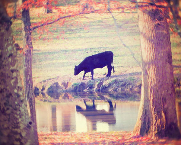 Black Cow Poster featuring the photograph My Own Paradise by Amy Tyler