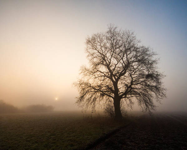 Landscape Poster featuring the photograph Mystic Morning by Davorin Mance