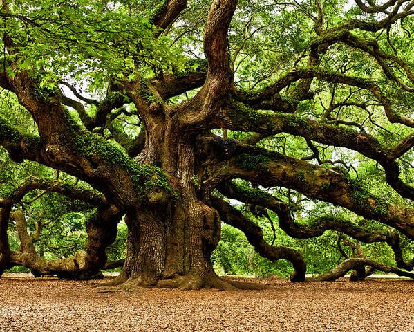 Angel Oak Tree Poster featuring the photograph Mystical Angel Oak Tree by Louis Dallara