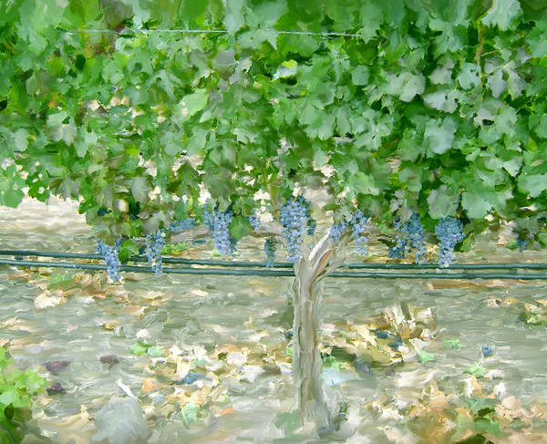 Napa Valley Poster featuring the painting Napa Vineyard by Paul Tagliamonte