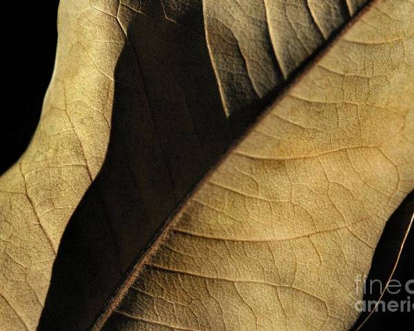 Nature Poster featuring the photograph Natural Seduction by Dan Holm