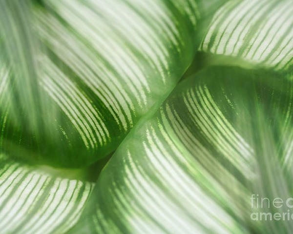 Leaf Poster featuring the photograph Nature Leaves Abstract In Green 2 by Natalie Kinnear